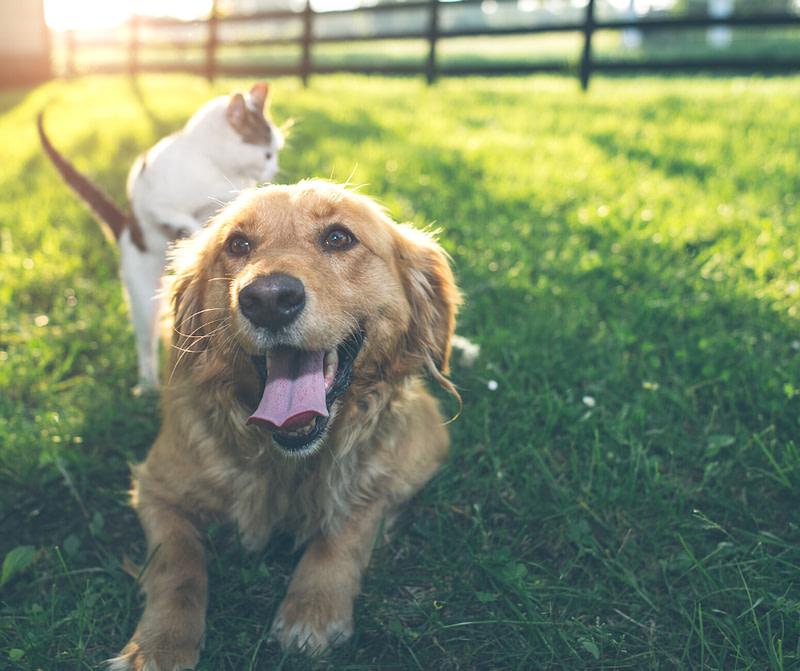 Animali in viaggio: come prepararsi alle vacanze con i nostri amici a 4 zampe