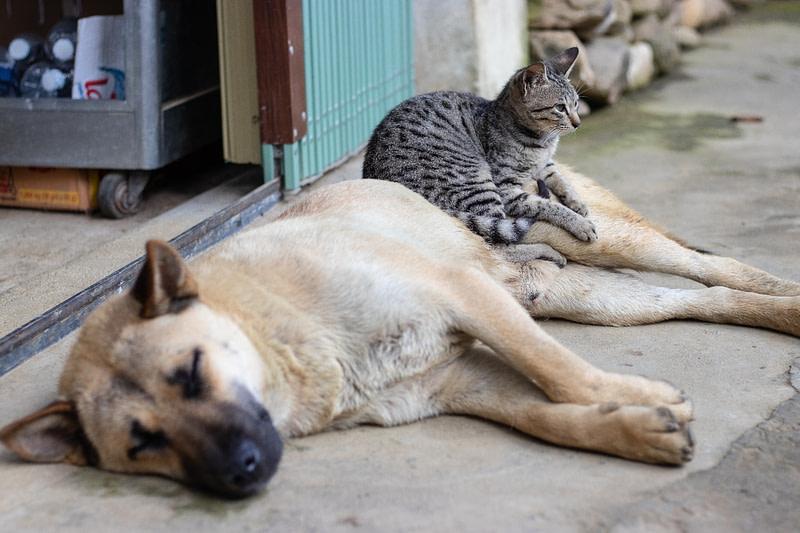 Animali in casa: consigli per una corretta e felice convivenza